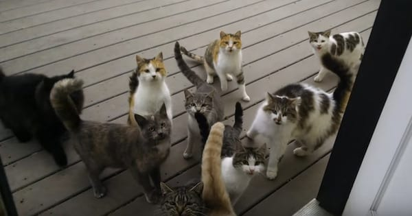 Man Has a Chorus of Cats Singing at His Door Each and Every Day!