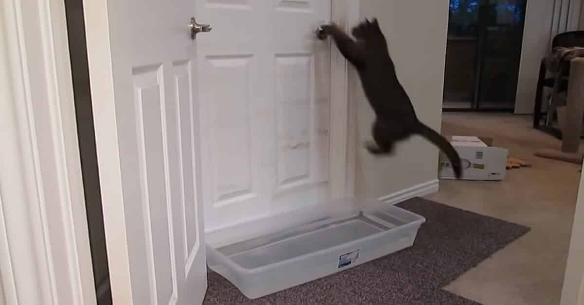 This Kitty Wants To Go Into The Other Room - But There Is A Huge Obstacle!