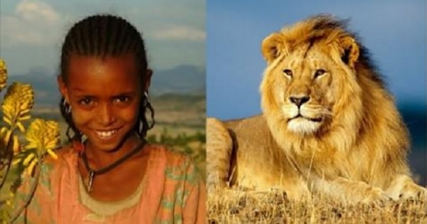 Lions Protect Young Ethiopian Girl from Evil Men Who Abducted Her!