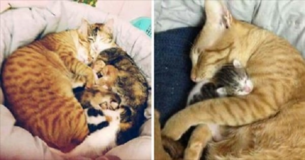 While This Mama Cat Was Giving Birth, The Daddy Cat ...