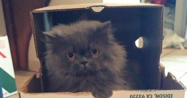 Cat Once Rescued from Drug House Is Now a Complete …