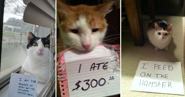 14 ADORABLE PHOTOS OF GUILTY CATS #7 JUST MADE MY DAY!
