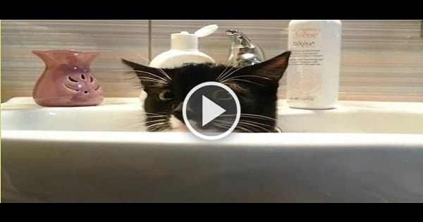 All These Cats Want – Is Some Privacy!