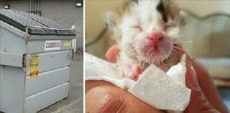 Woman Hears Kitten Crying In Dumpster, Then Vet Reveals 'He' Is Extremely Rare!