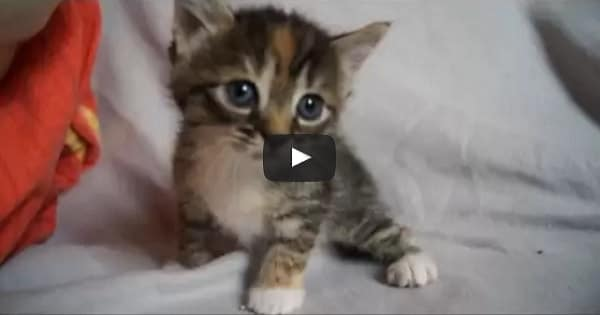 Tiny Kitten Meows Looking for Its Mama!