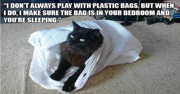 17+ Funny Struggles Only Cat Owners Can Understand!