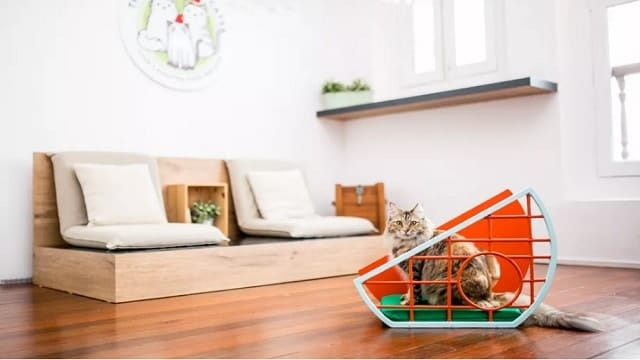 Furniture Design Show for Just For Cats Is a Thing Now!