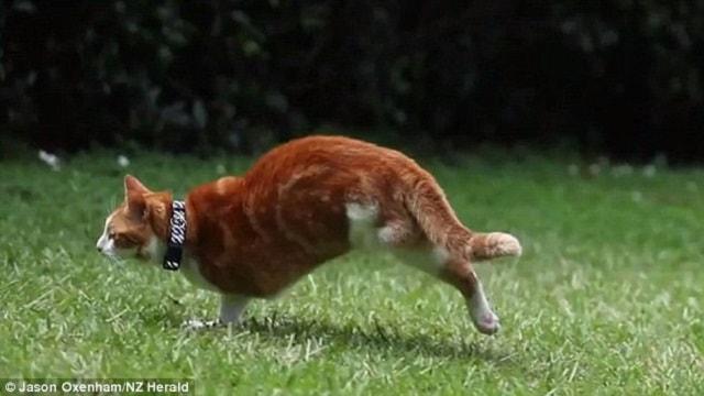 Incredible 2-legged Cat 'Super Simon' Can Still Run Despite Losing Both Left Legs Following Brutal …