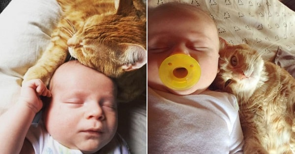 8-Week-Old Infant and Family's Cat Are the Very Best of …