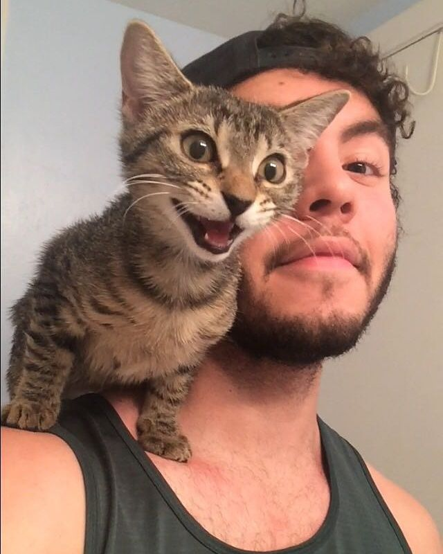 Cats Like To Sit On Shoulders 1