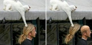 32 Images Proving Cats Are Master Thieves!