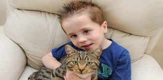 Hero Cat Defends 5-year-old Boy From Group Of ...