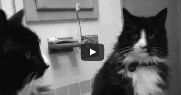 Presenting: Henri Le Chat Noir!! – You're Going To Love This One, We Promise!