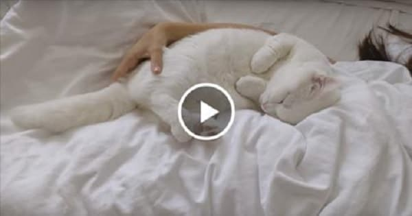 Cat With Amazing Purr Cuddling With Her Human!