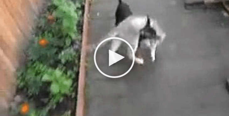 Naughty Cat Refuses To Come Inside Until Her Best Doggie Friend ...