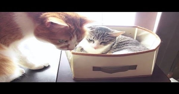 Polite and Respectful Kitty Gives Up Her Seat To An Elderly Cat