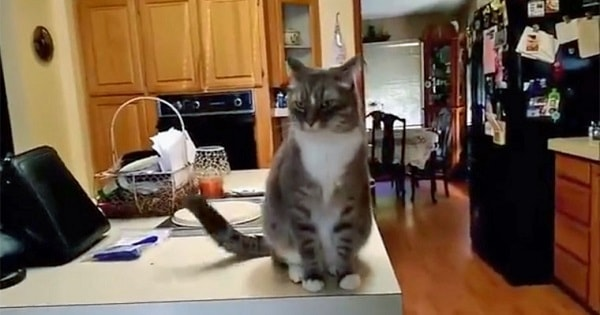 Cat Does Something Very Distinguished and Respectable When He First Meets Someone!