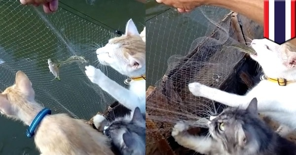 Man Takes His Cats Along Fishing With Him