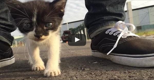 Cute Stray Kitten Follows Human Around Everywhere!
