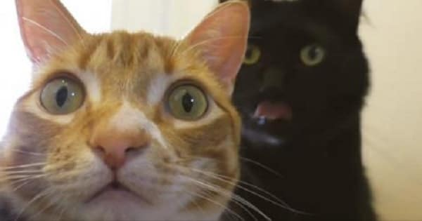 'Understanding Your Cat's Emotions' Starring Cole and Marmalade!
