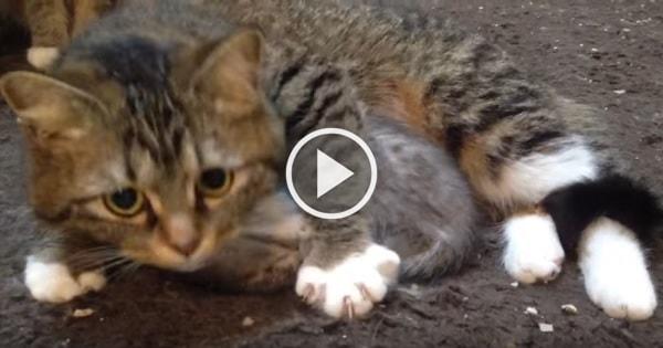 Mama Cat Closely Guarding Her Tiny Kitten!