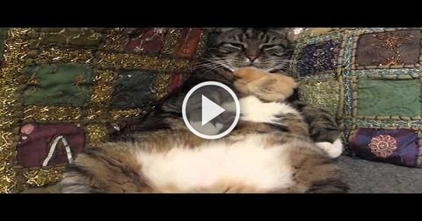 Caring Kitty Adopts Baby Chick, Loves Him Like Its Own Kitten!