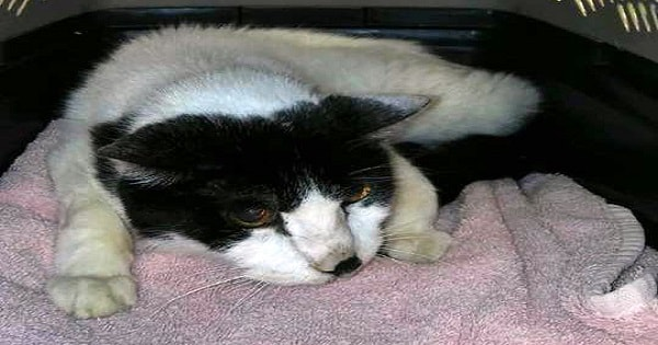20-Year-Old Cat 'Dumped at Shelter,' But Thankfully, Finds ...