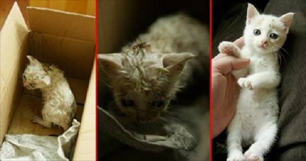 10+ Powerful And Inspiring Before & After Cat Rescue Stories Revealing The Power of Love