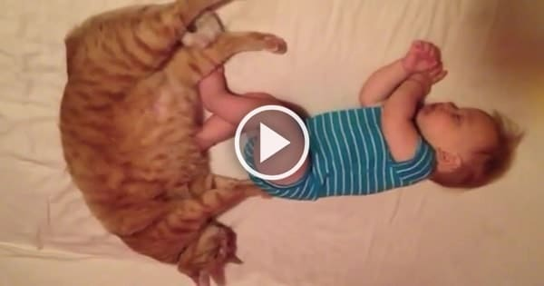 Ginger Cat Massages Sleeping Baby's Butt!