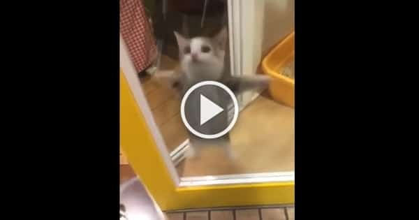 This Cat's Adorable Reaction To His Human Arriving Home Is Just Too Cute!