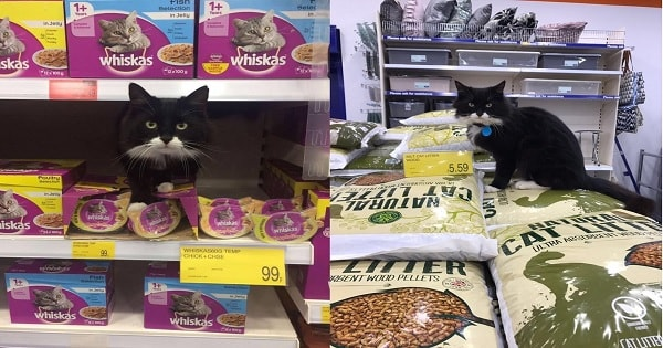Once Abandoned Cat Becomes 'Manager' Of Pet Department At …