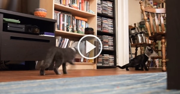 Kittens Become Confused by Their Cones!