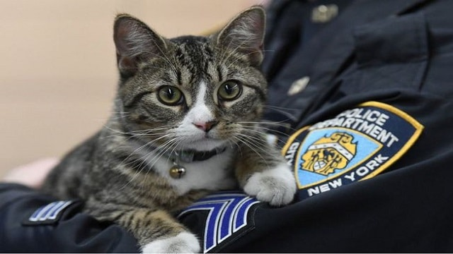 Meet The Abandoned Kitten Who Is Now The Top Cop At …