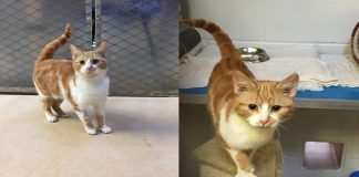 Stray Kitten Stuns Animals Shelter When It Turns Out To Be ...