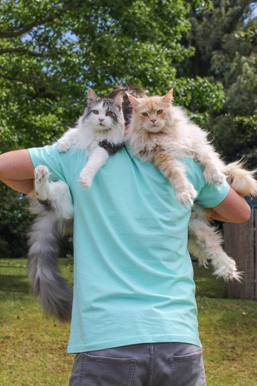 Cats Like To Sit On Shoulders 6