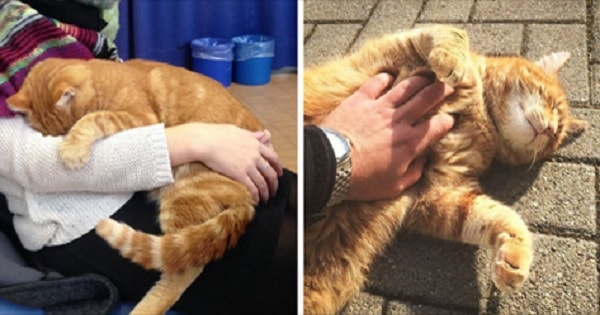 This Cat Comes To University On Daily Basis To Help Students With Cuddles!
