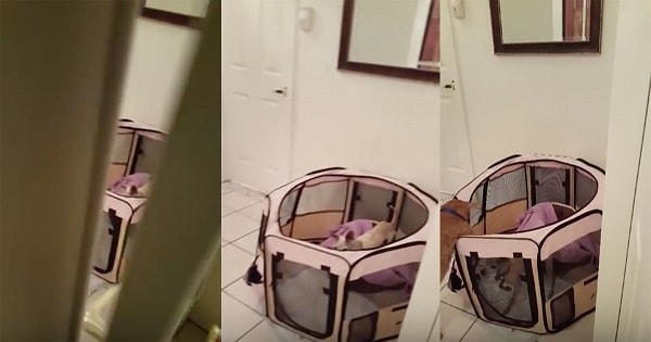 Naughty Cat Helps His Little Buddy Escape!