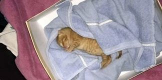 Man Heard Cries For Help, Discovered Orphaned Kitten Abandoned In A Garbage Bin