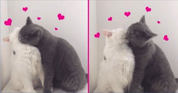 These Cats Had Not Seen Each Other for a Few Days – Here Is The Heart-touching Reunion