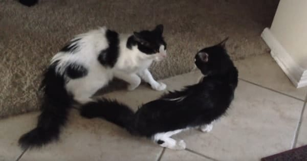 Cat Lost For One Month Is Reunited With His Brother
