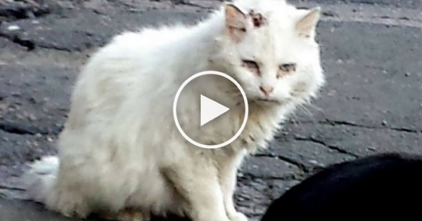 This Deaf And Blind Kitty Wouldn't Let Anyone Approach Him Until ...