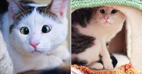 Bubbles The Cross-eyed Cat Is Rescued From A Feral Pack Of …