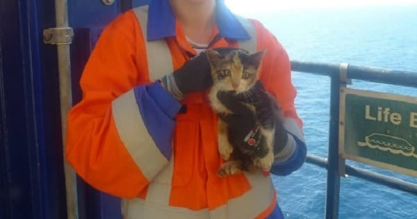 Stowaway Kitten Found On Oil Rig 30 Miles Offshore Is Rescued And Finally Gets …