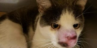 Cat With Terrible Infection Begged For Help But No One Listened Until ...