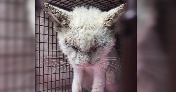 Cat Receives Help to See Again - Wait Until You See How Beautiful His Eyes Actually Are