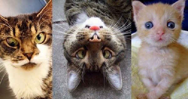 12 Cute 'Googly-eyed' Cats That Will Surely Make You Smile – But Why Are Their Eyes 'Googly'?