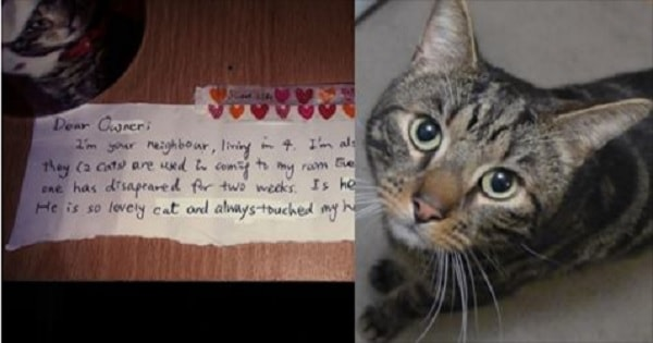 Man Mourning His Kitty Receives Touching Letter From a Stranger Who Also …