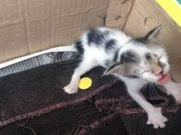 Tiny Abandoned Kitten Was Terribly Dehydrated & Malnourished When Found - But Just Look At ...