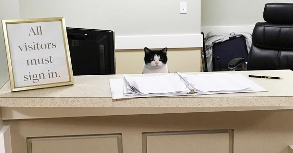 Stray Cat Creeps Her Way Into A Nursing Home And Lands Herself A Job