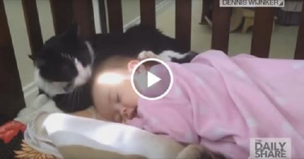 Loving Tuxedo Cat Snuggles Up To Toddler And Gives Her A Bath!